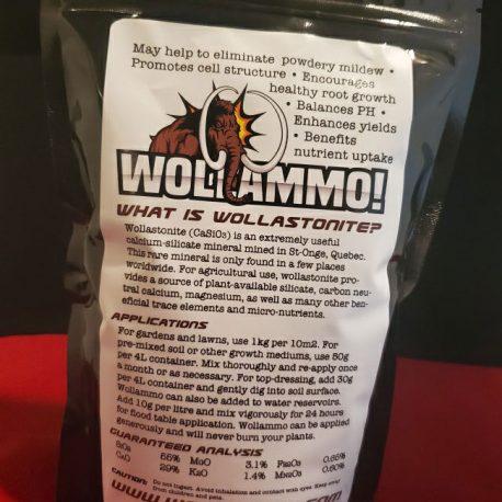 wollammo-back